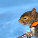 America's Got Talent Twiggy the Waterskiing Squirrel